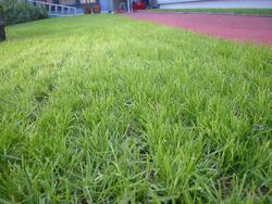 Полагане на изкуствена трева
